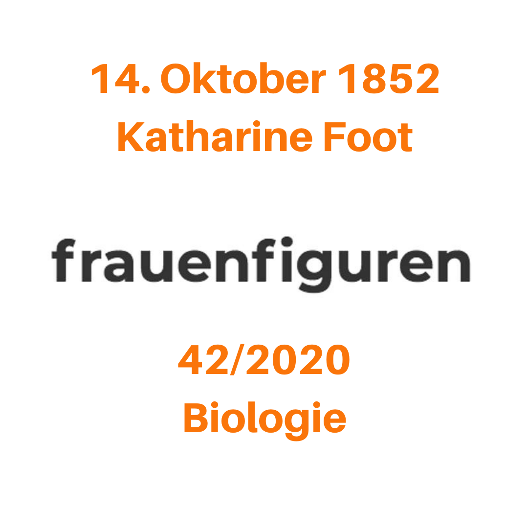 frauenfiguren katharine foot