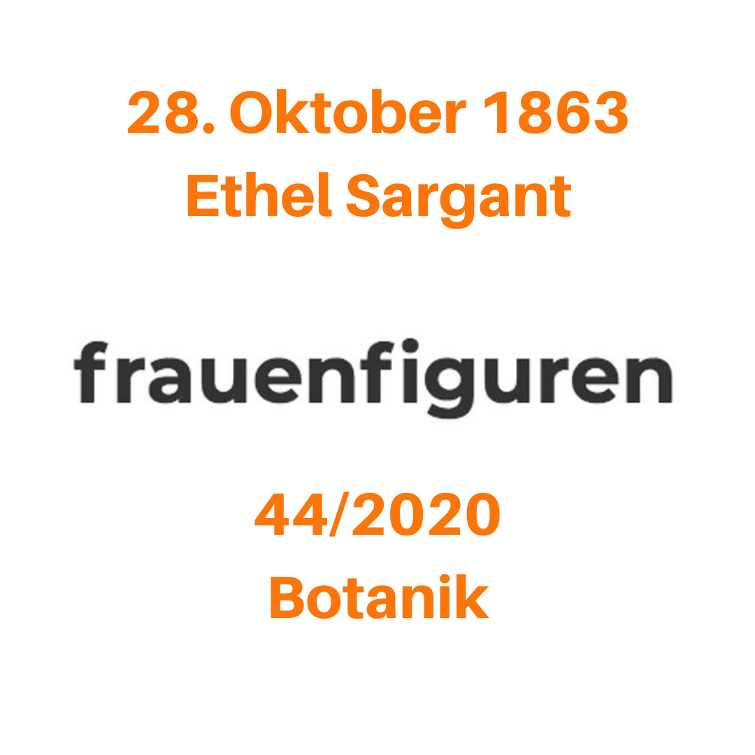 frauenfiguren ethel sargant